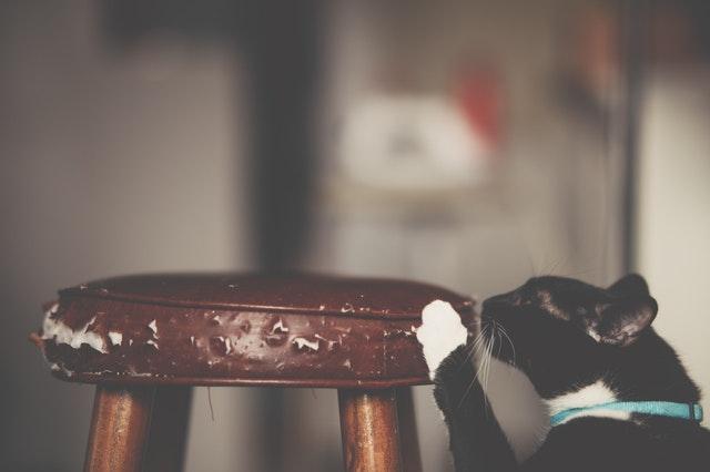 kat krabt aan meubelen