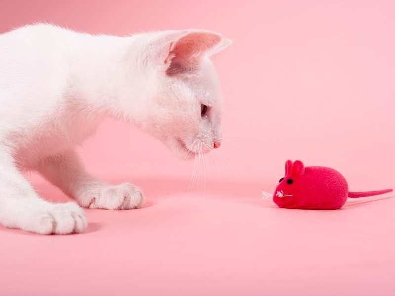 Automatische kattenspeeltjes en accessoires