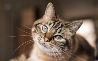 huiskat en binnenkat